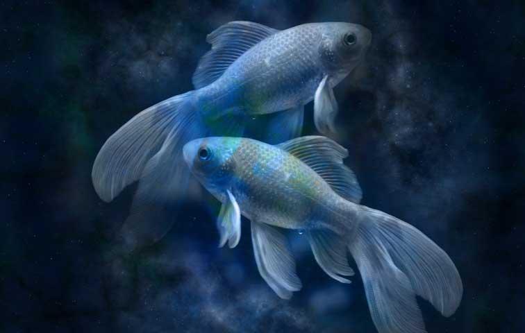 Poisson : Horoscope du jour